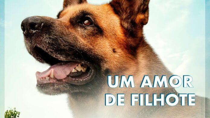 Um Amor de Filhote | Filme ganha trailer emocionante com resgate de cachorro